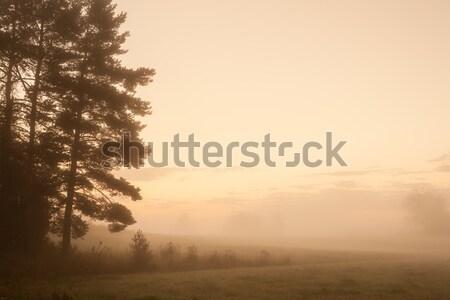 Puslu çayır şafak manzara bahar çim Stok fotoğraf © Juhku