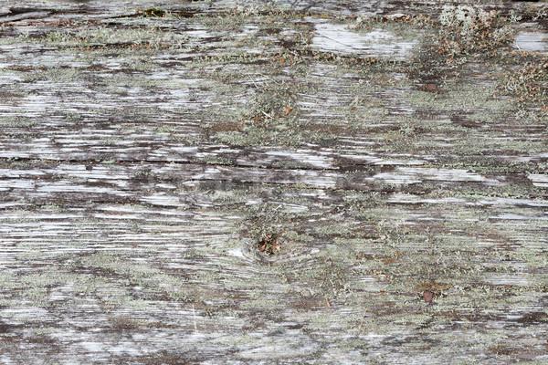 Aged natural gray wood background Stock photo © Juhku