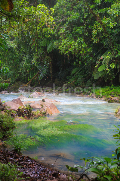 Rio celeste and lush rainforest Stock photo © Juhku