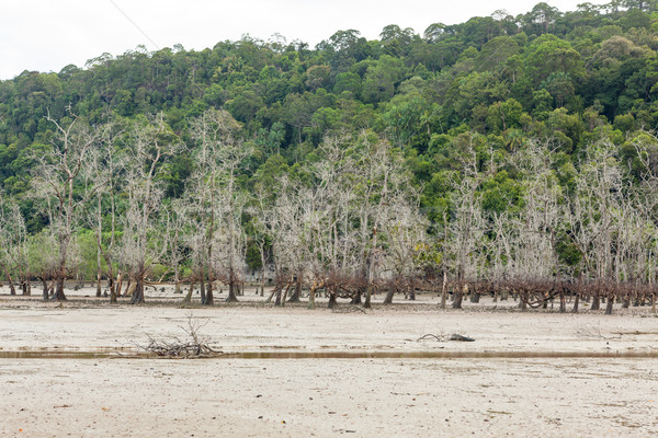 Dead trees in beach at low tide  Stock photo © Juhku