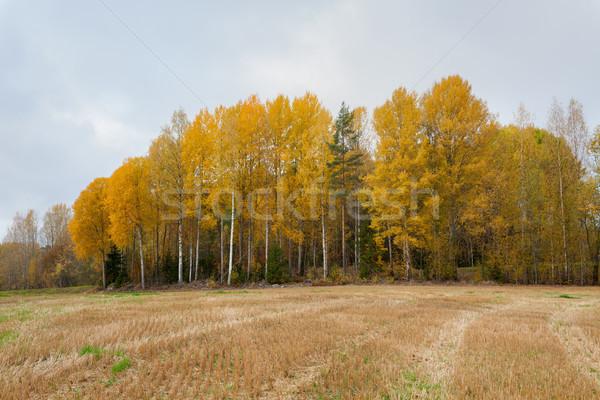 Wole jesienią krajobraz drzew niebo chmury Zdjęcia stock © Juhku