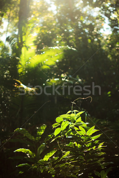 Mały roślin rozwój Rainforest słońca drzewo Zdjęcia stock © Juhku