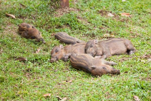 ребенка спальный трава лес природы Сток-фото © Juhku
