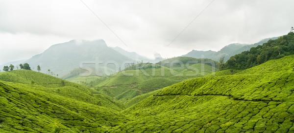 Thé panorama Inde nuageux jour feuille Photo stock © Juhku