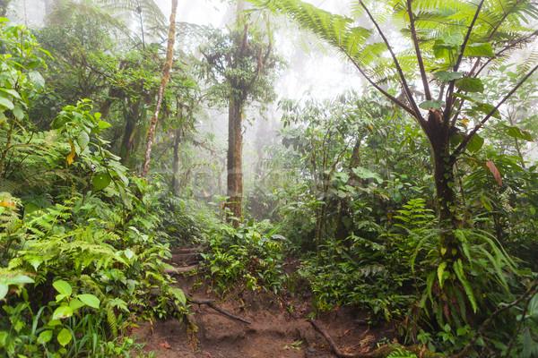 Deep in lush foggy rainforest Stock photo © Juhku