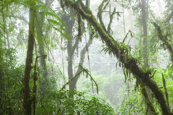 Misty foresta pluviale nube foresta riserva Costarica Foto d'archivio © Juhku