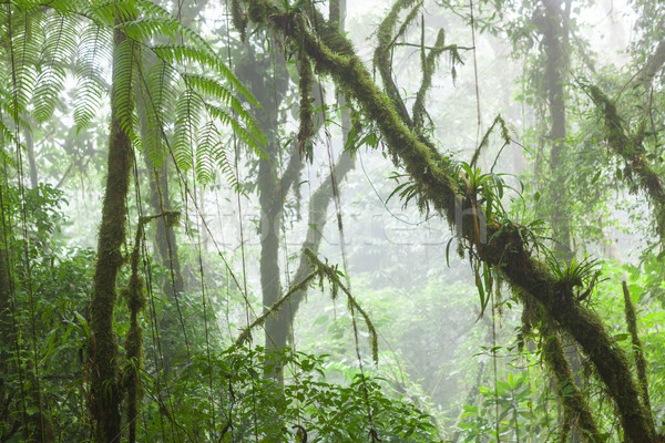 Brumoso selva nube forestales reserva Costa Rica Foto stock © Juhku