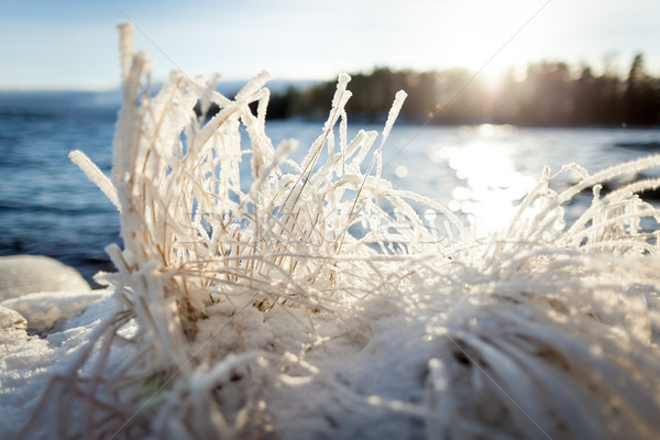 Hay covered in snow and sunshine Stock photo © Juhku
