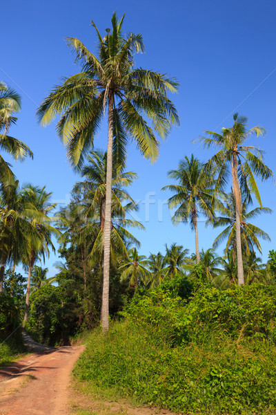 Tropical meadow and road with palm trees and clear blue sky Stock photo © Juhku