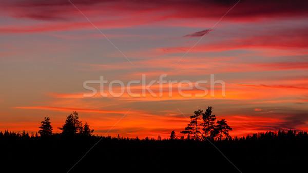 Ağaç siluet güzel canlı gün batımı bulutlar Stok fotoğraf © Juhku