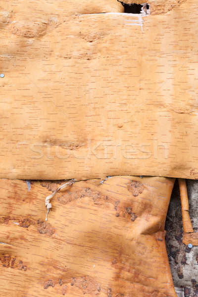 Birch bark texture Stock photo © Juhku