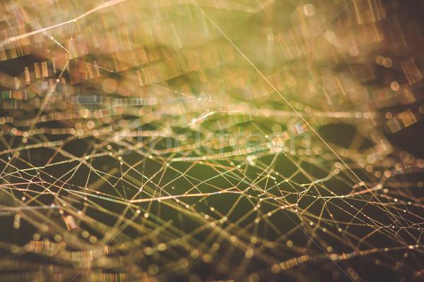 Pajęczyna makro streszczenie płytki dziedzinie projektu Zdjęcia stock © Juhku