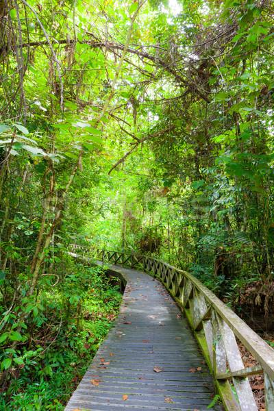 Gęsty Rainforest jaskini Malezja borneo lasu Zdjęcia stock © Juhku