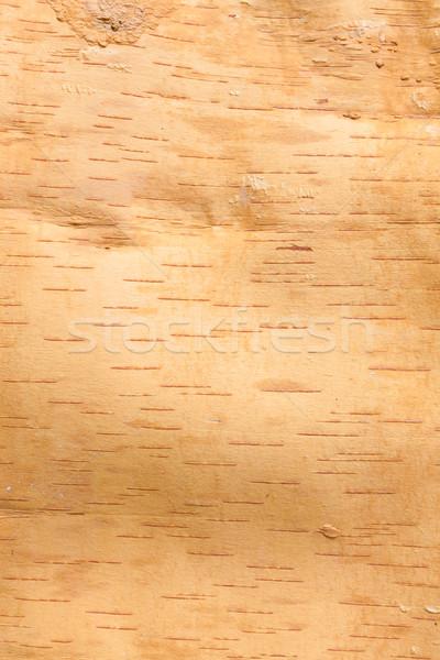 Huş ağacı havlama doku içinde ahşap soyut Stok fotoğraf © Juhku