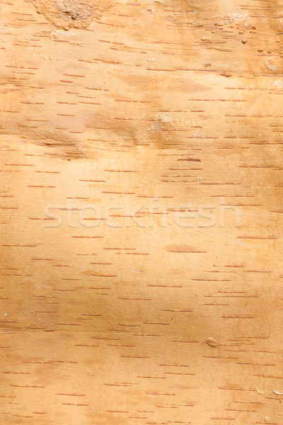 береза Кора текстуры внутри древесины аннотация Сток-фото © Juhku