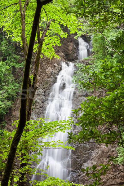 Cascata Costarica natura acqua panorama sfondo Foto d'archivio © Juhku