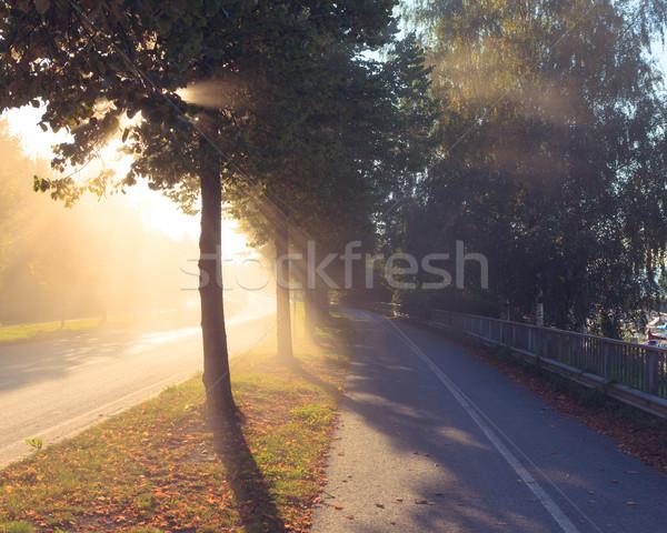 Sun rays through tree next to a road Stock photo © Juhku