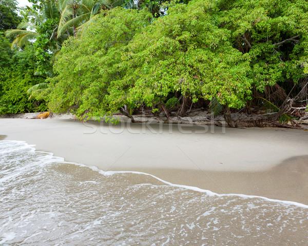Playa Costa Rica arena árboles agua nubes Foto stock © Juhku