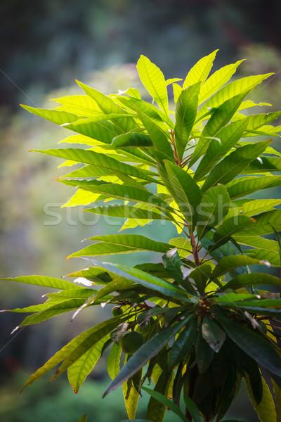 Exuberante verde planta grande hojas primer plano Foto stock © Juhku