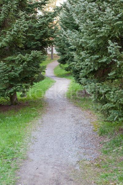 Small footpath in park Stock photo © Juhku