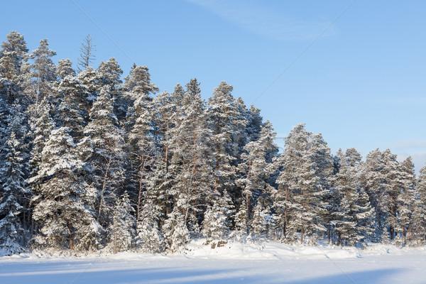 Congelato lago neve coperto foresta sereno Foto d'archivio © Juhku
