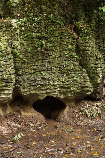 穴 自然 石の壁 森林 テクスチャ 壁 ストックフォト © Juhku