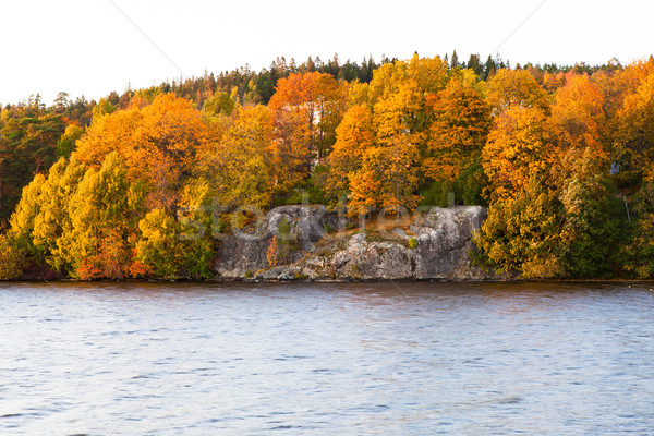 Autumn forest and lake landscape Stock photo © Juhku