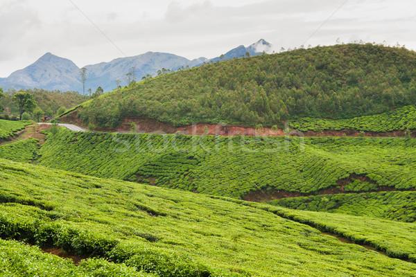 Thee Indië bewolkt dag blad bomen Stockfoto © Juhku