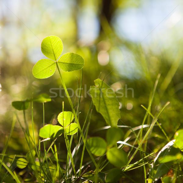 Groeiend natuur verlicht voorjaar achtergrond zomer Stockfoto © Juhku