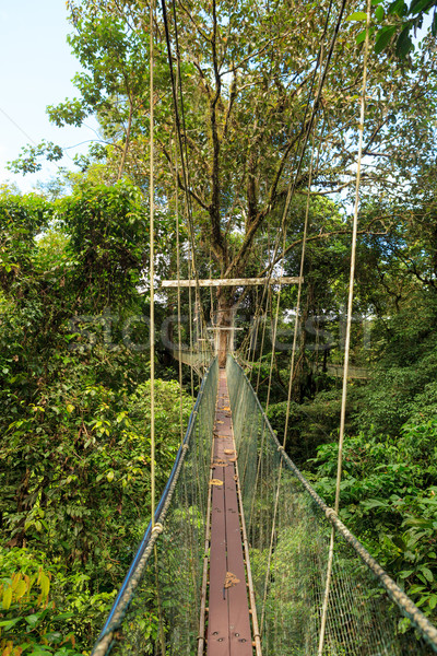 Canopy walk at gunung mulu national park Stock photo © Juhku