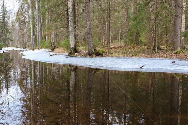 部分 凍結 森林 河 春天 芬蘭 商業照片 © Juhku