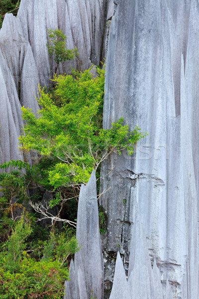 Stock photo: Limestone pinnacles at gunung mulu national park