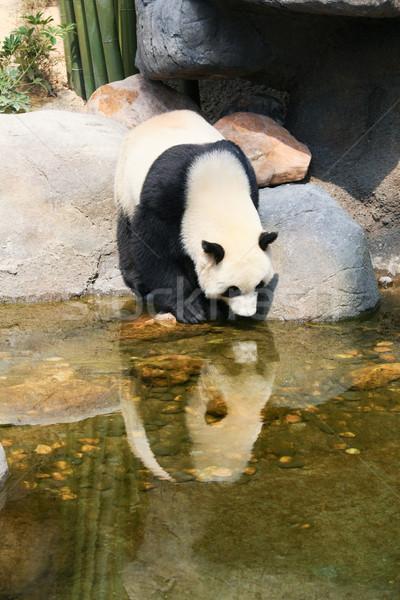 Panda water reus natuur beer park Stockfoto © Juhku