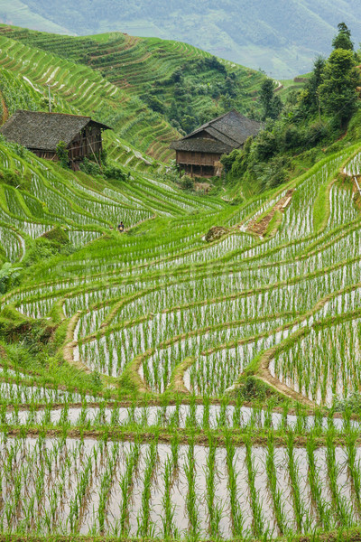 Stock photo: Rice fields in longshen china