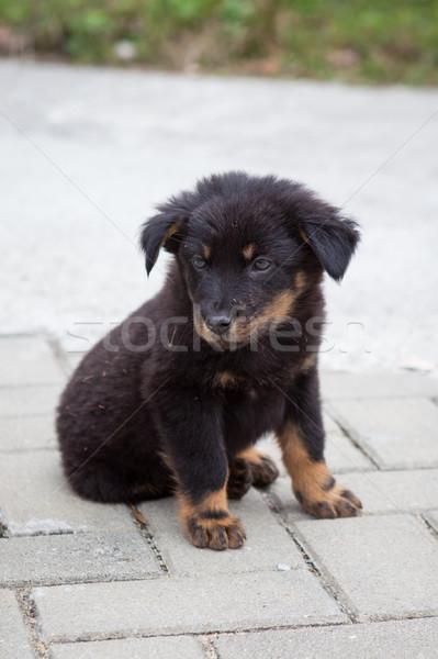 черный щенков сидят глядя городского Сток-фото © Juhku