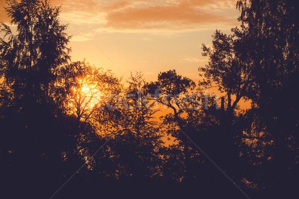 Foggy sunrise at behind trees filter edit Stock photo © Juhku