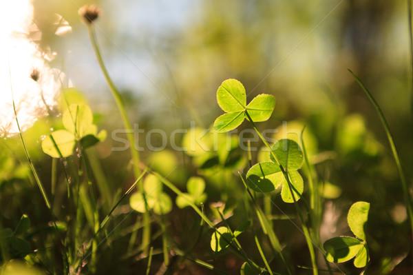 Crescente natureza primavera grama campo Foto stock © Juhku