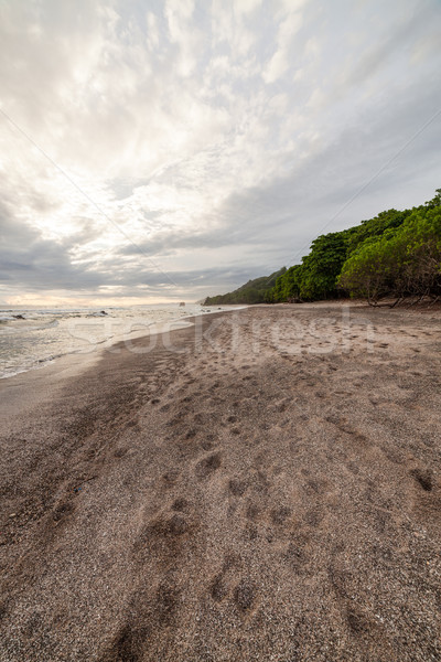 Playa tropical Costa Rica forestales playa agua Foto stock © Juhku