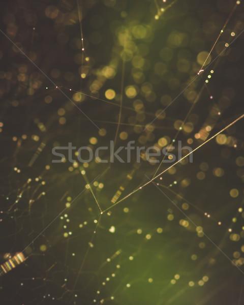 Spinneweb macro abstract ondiep veld water Stockfoto © Juhku