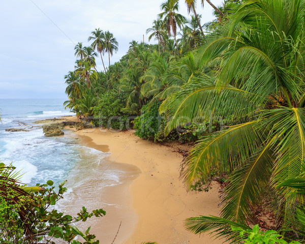 Idyllic beach Manzanillo Costa Rica Stock photo © Juhku
