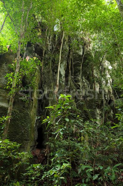 Kamień Urwisko Rainforest bujny pozostawia dżungli Zdjęcia stock © Juhku