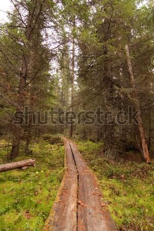 Stock fotó: Erdő · Finnország · fa · természet · zöld · levelek