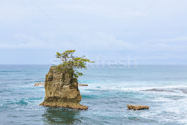 Rock islet and tree on top Stock photo © Juhku