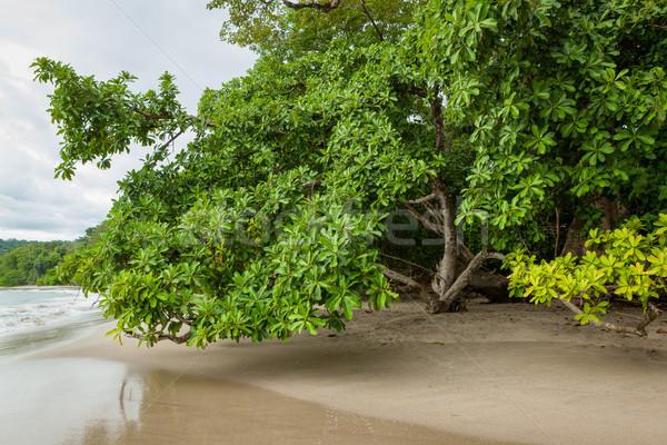 ビーチ コスタリカ 砂 木 森林 自然 ストックフォト © Juhku