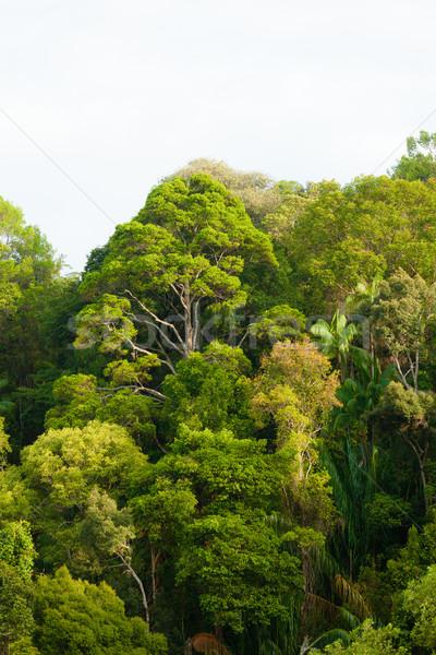 Foresta pluviale view albero foresta panorama sfondo Foto d'archivio © Juhku