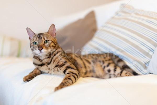 Jovem gato sofá branco retrato Foto stock © Juhku