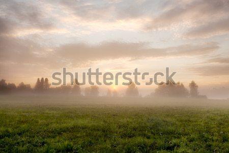 Tranquil foggy grassland at sunrise Stock photo © Juhku