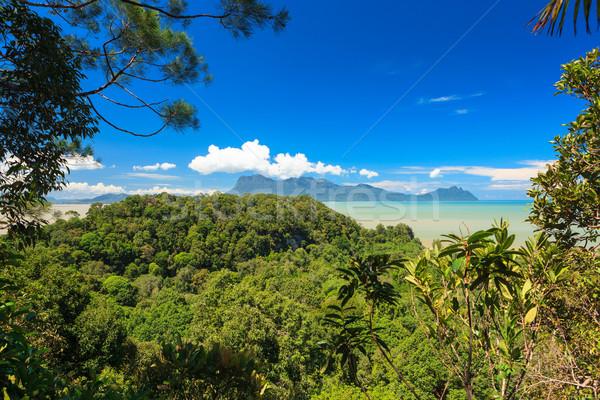 熱帶 景觀 叢林 丘陵 馬來西亞 婆羅洲 商業照片 © Juhku