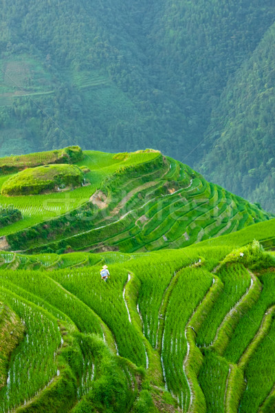 Rice terraces of longshen in china Stock photo © Juhku