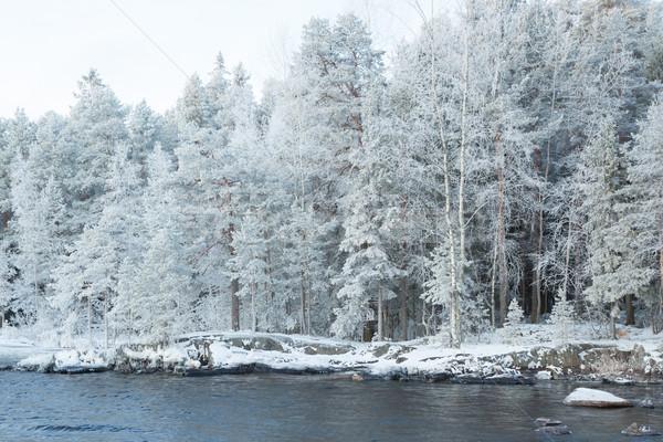 Ijzig winter bos meer hemel water Stockfoto © Juhku